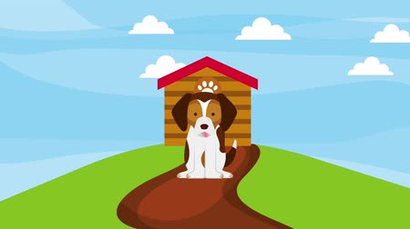 road sign : happy dog sitting road in the field wooden house animation hd