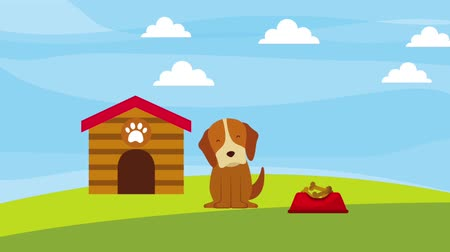 jardim : happy dog in the field wooden house and plate food animation hd Vídeos