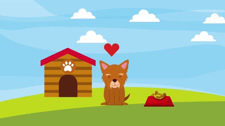 short clip : little dog mascot love wooden house and food animation hd