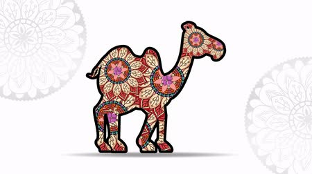 round ornament : camel with ethnic mandalas boho style, hd video animation