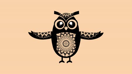 open blossom : owl bird with boho style,hd video animation Stock Footage