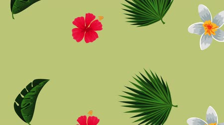exotic leafs and flowers tropical pattern , hd video animation Wideo