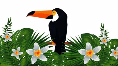 impressão digital : exotic toucan and flowers , hd video animation