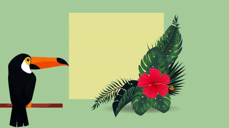 toucan : exotic toucan and flowers , hd video animation