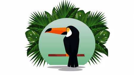 impressão digital : exotic toucan and flemish with pineapple in circular frame , hd video animation