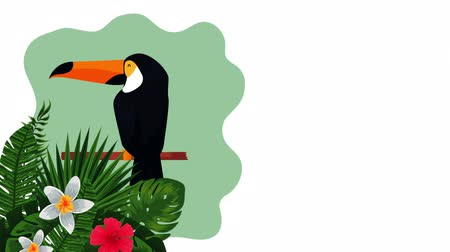 hibiscus : exotic toucan and flowers , hd video animation