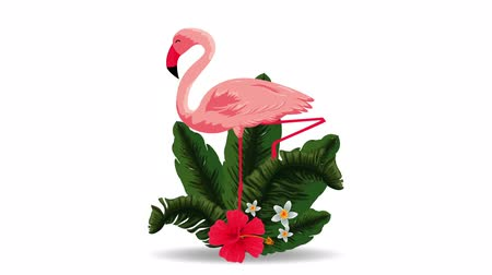 hibiscus : beautiful flemish exotic bird with flowers , hd video animation Stock Footage