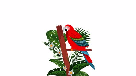 hawaje : exotic guacamaya bird tropical animation , hd video