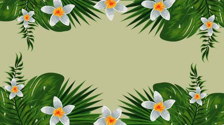 havaiano : exotic leafs and flowers tropical garden , hd video animation