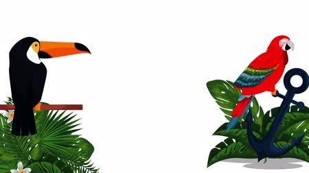 toucan : exotic toucan and papagayo leafs animation , hd video animation