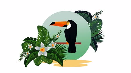 toucan : exotic toucan and flowers animation , hd video animation Stock Footage