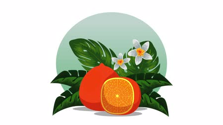 cítrico : fresh tropical and exotic oranges fruits , hd video animation