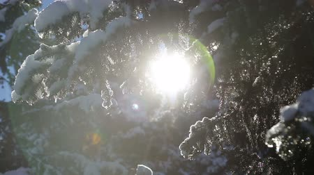 saçak : beautifull amaizing fairy spring sun shining landscape with positive melting drops of snow after winter slowmotion