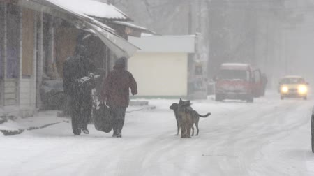 cur : Dogs in heavy snow