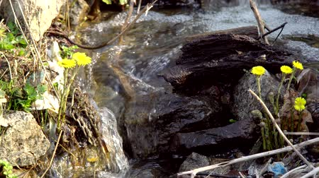 rivulet : A stream, water flowing down a stony surface, feeding plants with moisture