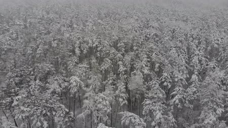 размеры : Aerial photography flight over the snow-covered winter forest. Winter landscape a large amount of snow.