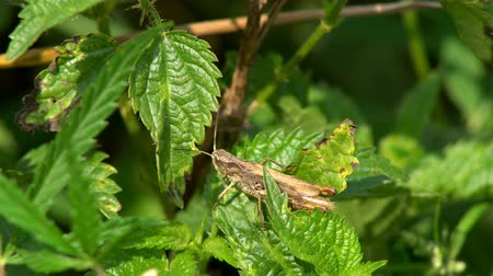 wrecker : Grasshopper sitting on a green