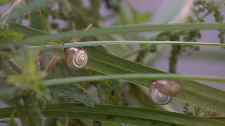 Snail sitting on the green stalks