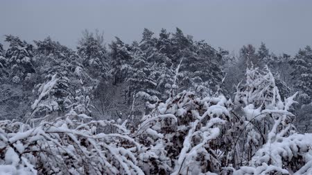 paese delle meraviglie : Snowy forest landscape