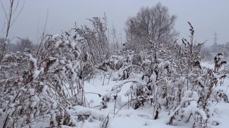 ель : Snowy forest landscape