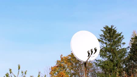 targeted : Satellite dish in a forest