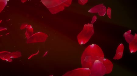 florista : Rose Petals - romantic background