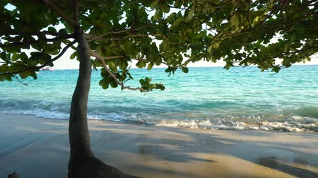 elvonult : Beautiful Low Hanging Tree At Tropical Sandy Beach With Calm Waves Hitting Shore on Exotic Island Stock mozgókép