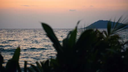 visto : Orange Colors Reflecting From Ocean During Dusk Seen Through Shrubs and Bushes at Beach Stock Footage