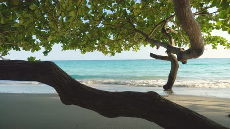 tajlandia : Tree at Tropical Island Beach and Calm Waves Crashing - Dolly Motion Forward Wideo