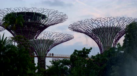Singapore Supertree Grove and People on Skywalk at Gardens by The Bay at Dusk