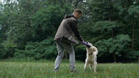 humanóide : Man and Golden retriever dog playing or training with toy for animal outdoor at nature Stock Footage