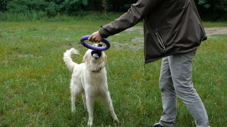 ações : Man and Golden retriever dog playing or training with toy for animal outdoor at nature Stock Footage