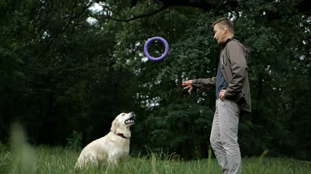 itaat : Man and Golden retriever dog playing or training with toy for animal outdoor at nature Stok Video