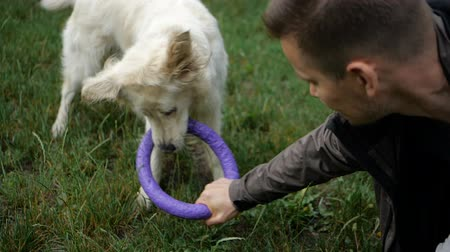 Man and Golden retriever dog playing or training with toy for animal outdoor at nature Стоковые видеозаписи