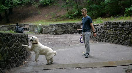 тянуть : Man and Golden retriever dog playing or training with toy for animal outdoor at nature Стоковые видеозаписи