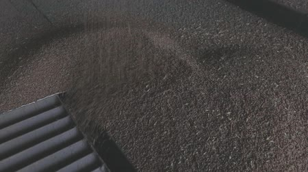 cereal product : grain reception from a freight car on a railway at an elevator, grain runs in a beautiful flow, close-up Stock Footage