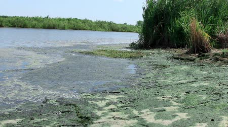 hijenik olmayan : Ecology. Environmental pollution on the beach. Rivers turn into a swamp. Stok Video