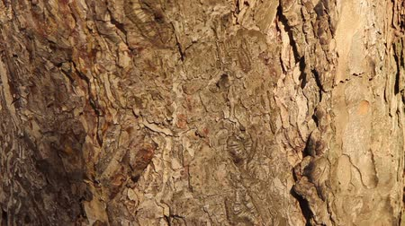 pine bark texture on which a small ant crawls and a fly sits