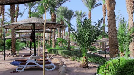 beach on the red sea in egypt resort line
