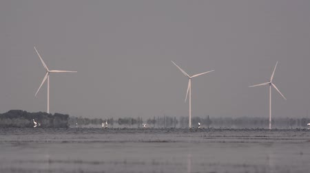 var : Birds on the lake. White birds on the pond. Wind turbines. Wind energy. A flock of birds. Ecology. Power engineering. Pelicans. Lake with birds. Electricity, wind energy, energy, alternative energy, light, modern innovative technologies, environment energ