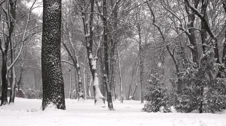 Winter city park. Snow blizzard, Snow fell slowly in the forest. Snow-covered trees. Winter cold snow cyclone.