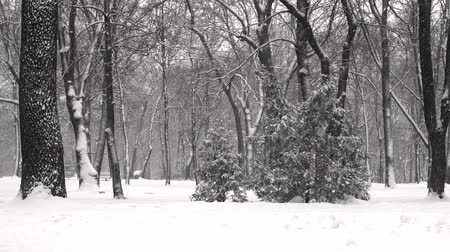 Snow falls at a slowed pace. Winter city park. Snow blizzard, snow-covered trees. Winter cold snow cyclone.