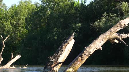 Dead tree in the river. The muddy river. River in the jungle. Delta is a complete river. Water resources of the earth.