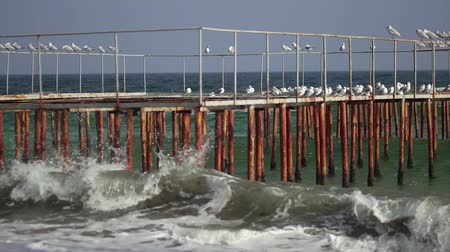 Seagulls are sitting on the pier. Sea waves in slow motion. Sea coast in sunny weather.