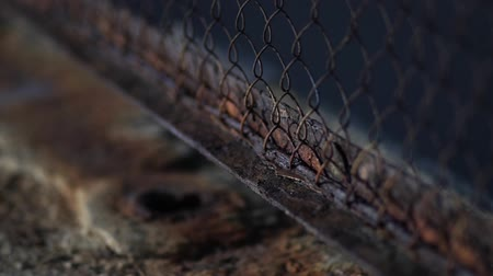 mesh : Harmful effects of oxygen and water on the metal. Iron rust. Oxidation of metals. Stock Footage