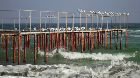 midye : Seagulls are sitting on the pier. Sea waves in slow motion. Sea coast in sunny weather. Coastline. Sea beach. Rusty iron pier. Stok Video