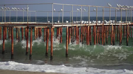 Seagulls are sitting on the pier. Sea waves in slow motion. Sea coast in sunny weather. Coastline. Sea beach. Rusty iron pier. Stock mozgókép