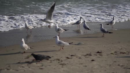 óceánok : The coast of the southern sea. Pigeons and seagulls on the shore. Sea sandy beach in summer.