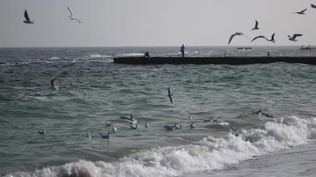 óceánok : Waves in slow motion. Sea coast in good weather. Coast of the Black Sea. Gulls on the sea waves. Beautiful seascape. Stock mozgókép