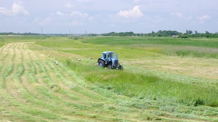 Summer scene in Ukraine - mowing hay with stork inspection on a water-meadow Vídeos